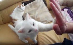 """High Five - Katze macht """"Gib mir fünf"""""""