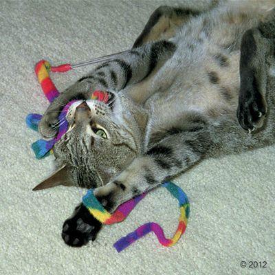 Katze spielt mit Spielangel Cat Charmer